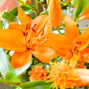 Lilien und Färberdisteln