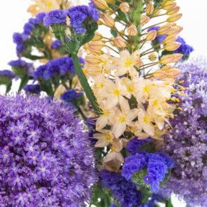 Steppenkerze, Allium und Statice