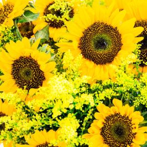 Sonnenblumen und Solidago
