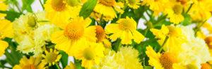 Hello Yellow: Helenium und Nelken