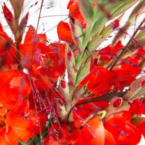 Gladiolen und Panicum