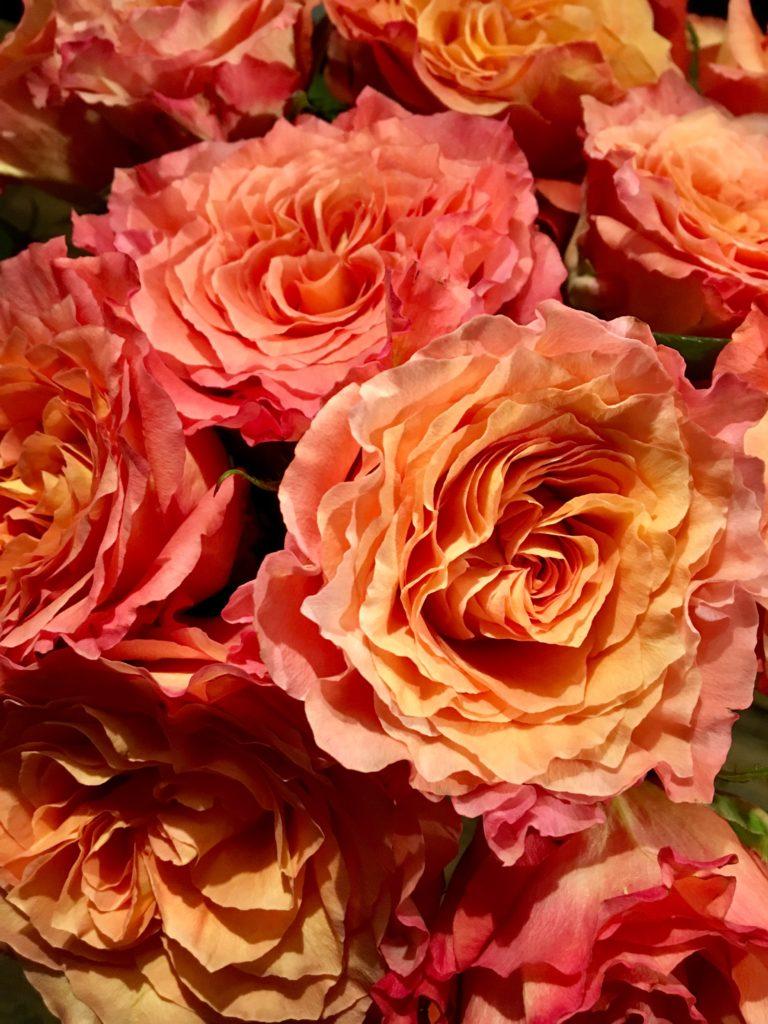 Rosen für DIY Kürbis-Vase