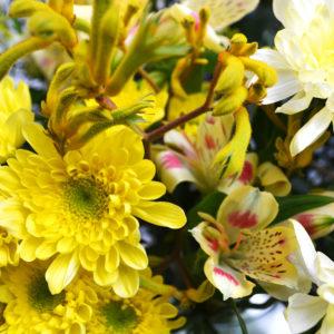 Australian Sun: Kängurufüßchen, Inkalilien, Chrysanthemen, Solidago