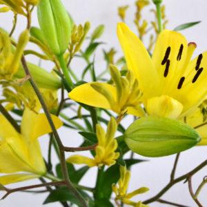 Yellow Kangaroo: Kängurufüßchen, Lilien