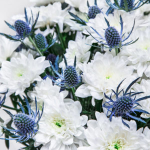 Stars in the Night: Chrysanthemen, Edeldisteln