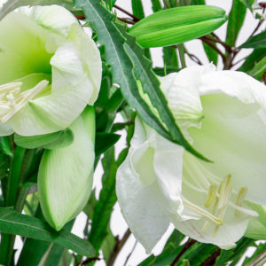 Winter Jungle: Amaryllis, Lilien, Grevillea