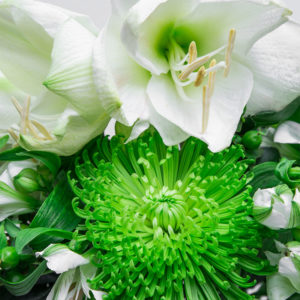 Green Twist: Amaryllis, Chrysanthemen, Inkalilien, Hypericum