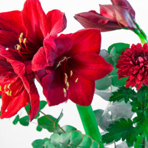 Lovely Red: Amaryllis, Chrysanthemen, Eucalyptus