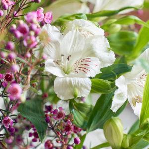 Inkalilien und Waxflower