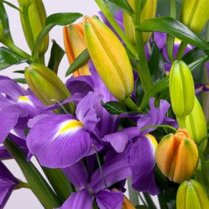 Iris, Lilien, Strelitzie
