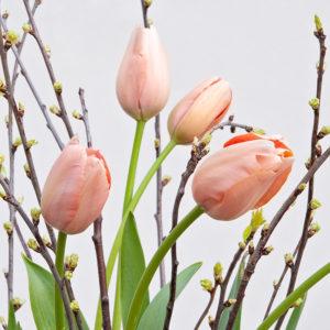 Französische Tulpen, Kirsche