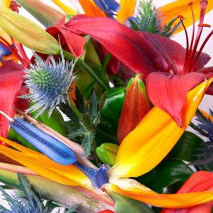 Lilien, Strelitzien und Disteln