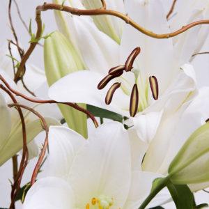 Lilien, Weide