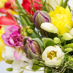 Tulpen, Freesien, Heidelbeere