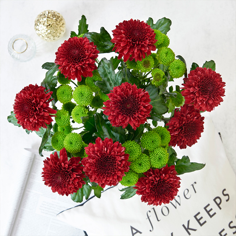 Chrysanthemen, Knopfsantini