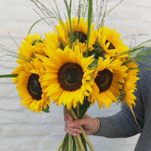 Sonnenblumen, Panicum