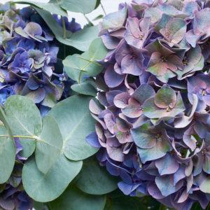 Hortensien & Eucalyptus
