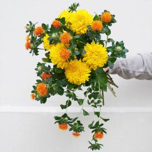 Chrysanthemen, Färberdistel