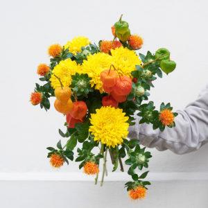 Chrysanthemen, Färberdistel, Zierphysalis