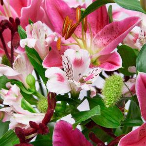 Lilien, Inkalilien, Kängurufüsschen & Hirse
