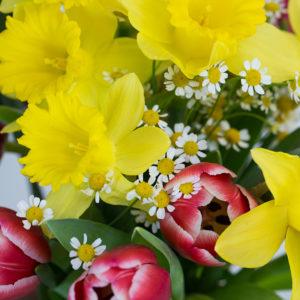 Blumen der Woche: Colour Sensation