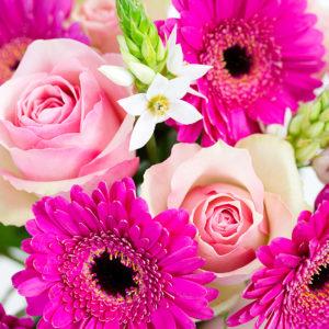 Blumen der Woche: Graceful Harmony