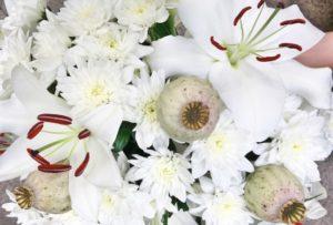 Blumen-der-Woche