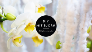 Winterorchidee-DIY-mit-Björn