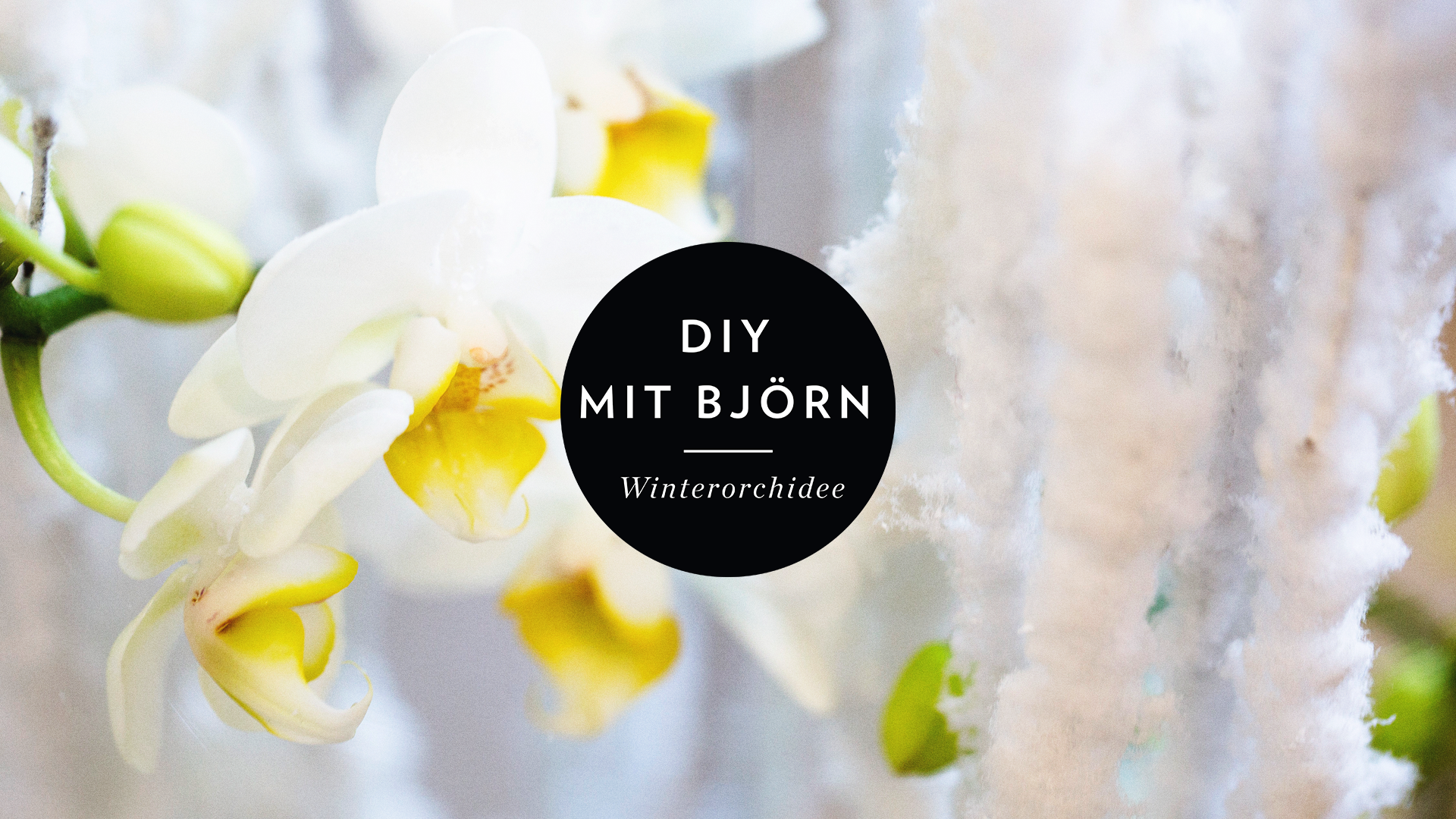 DIY MIT BJÖRN: Winterorchidee in der Vase