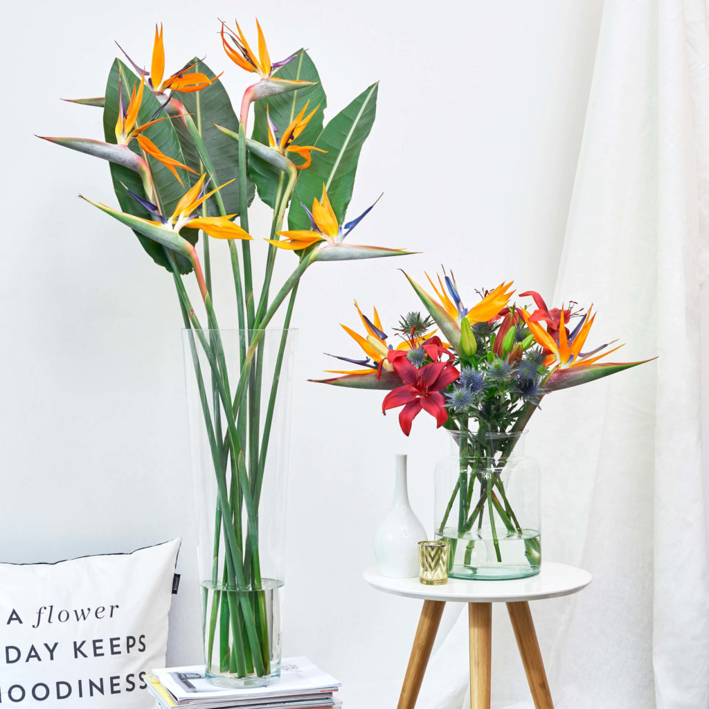 Blumen der Woche