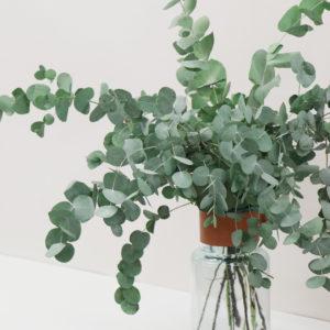 Eukalyptus_Bouquet