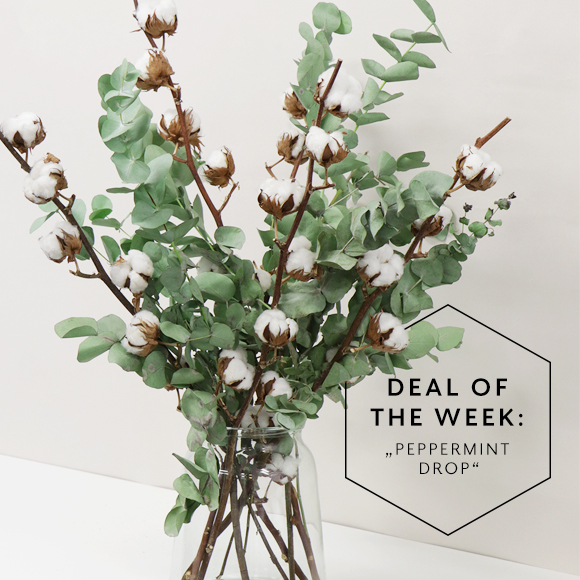 Deal_of_the_Week_KW08