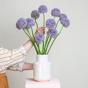 Allium_online_bestellen