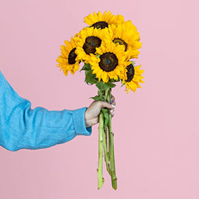 Sonnenblumen_pur