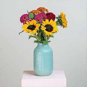 Sonnenblumen_Celosia