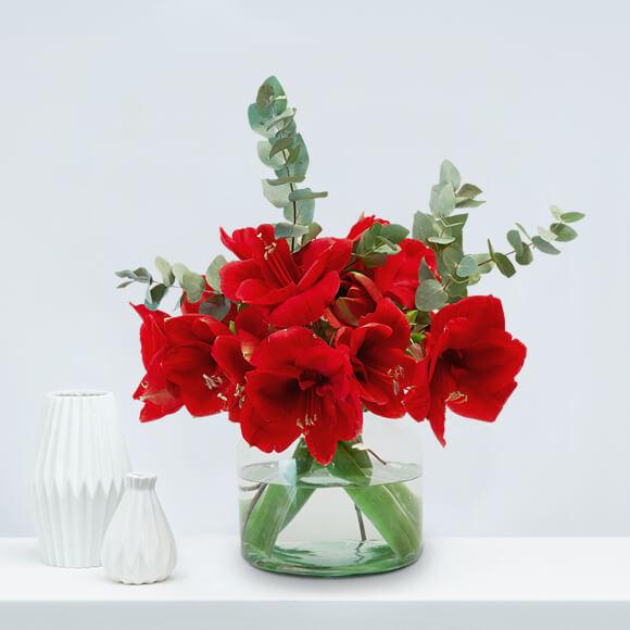 Weihnachtsblumen-rote-Amaryllis-Eukalyptus-weihnachten