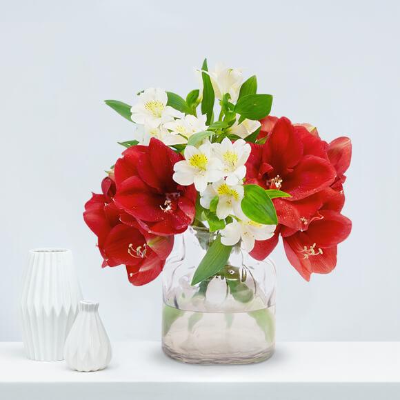 weihnachten Weihnachtsblumen-Amaryllis-Alstroemeria