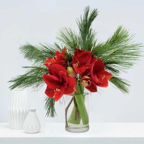 Weihnachtsblumen-kiefer-amaryllis