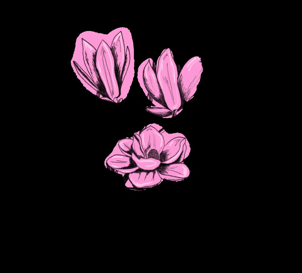 Saisonkalender März Magnolie