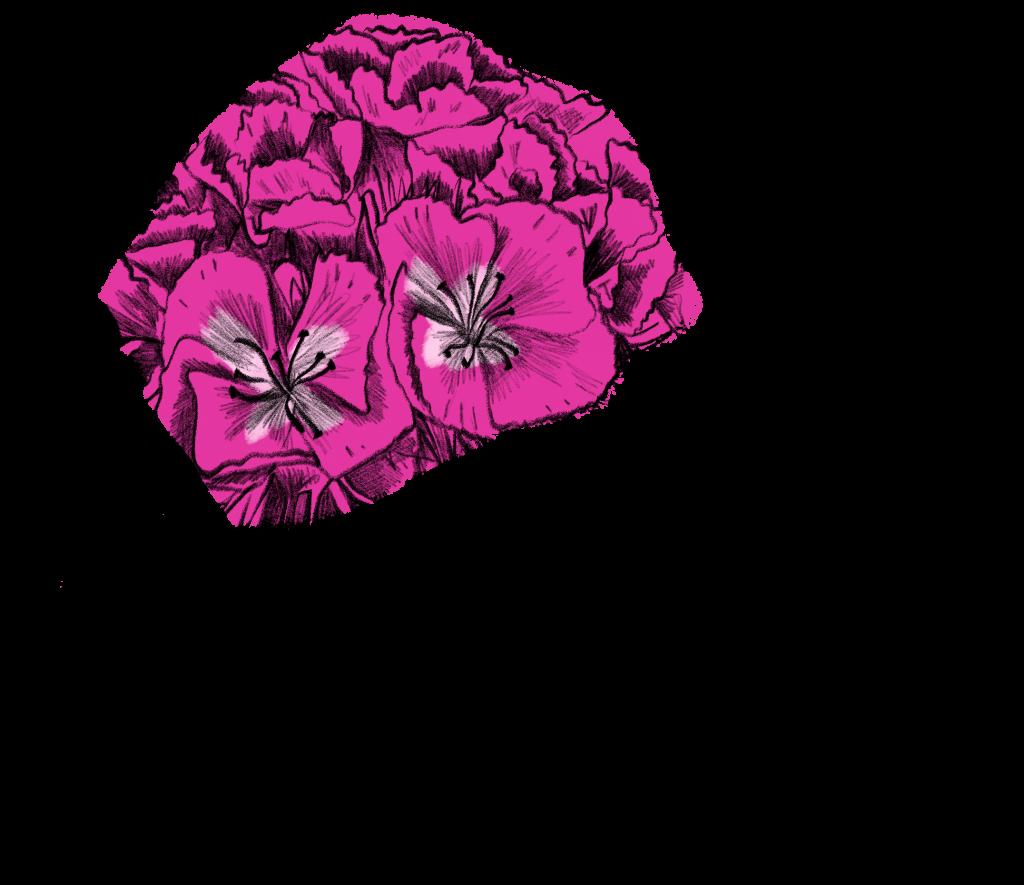 Blumen im Juni Bartnelken