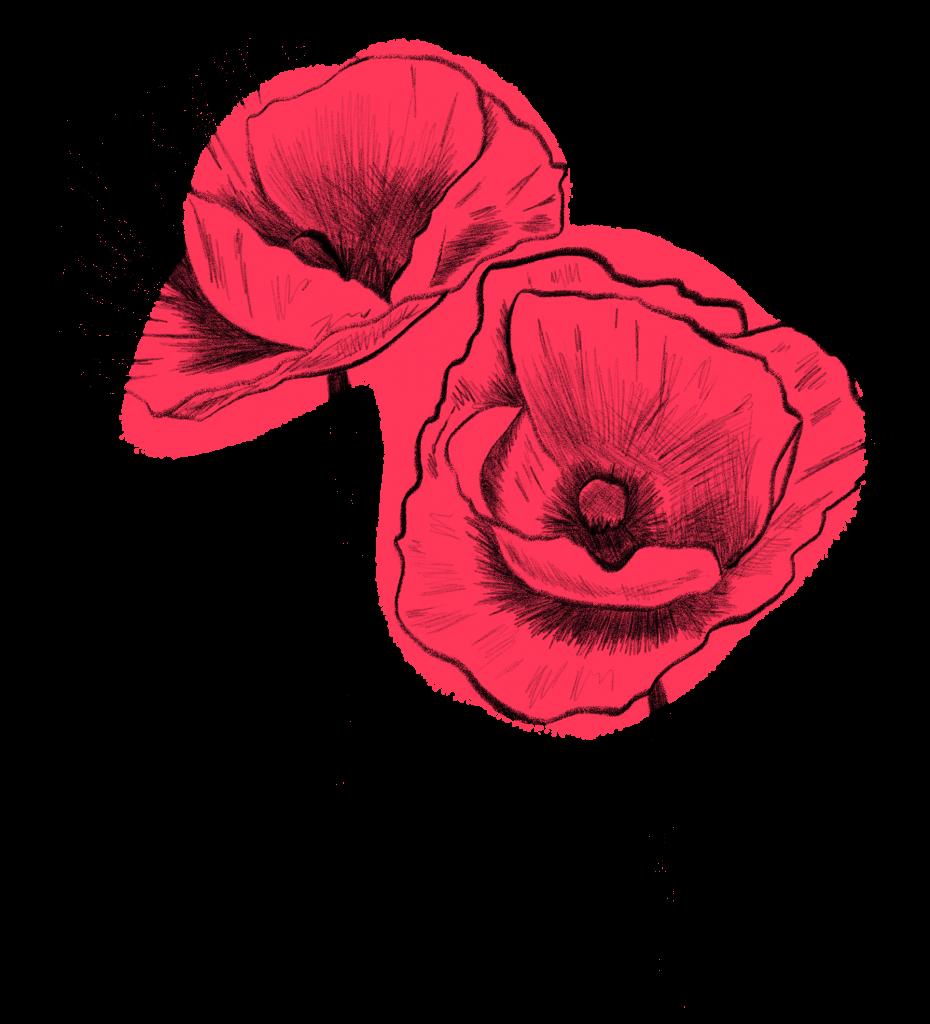 Blumen im Juni Klatschmohn