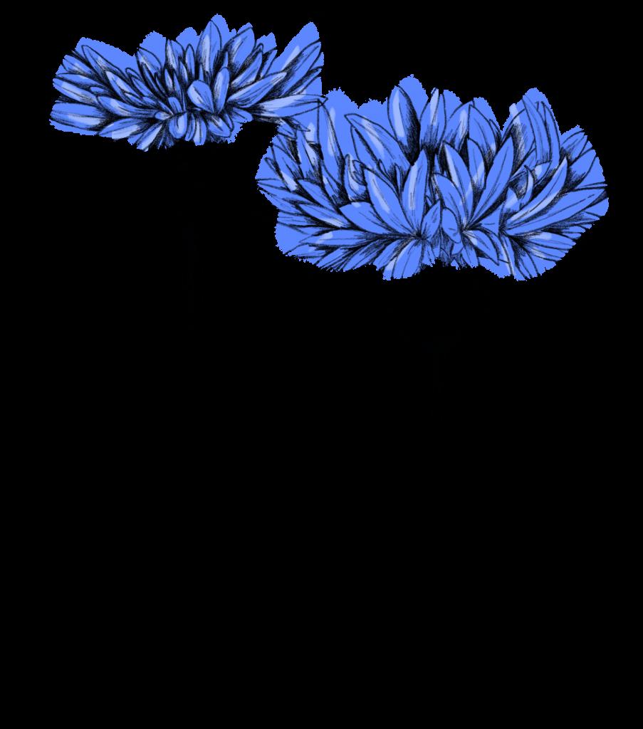 Blumen im Juni Kornblume