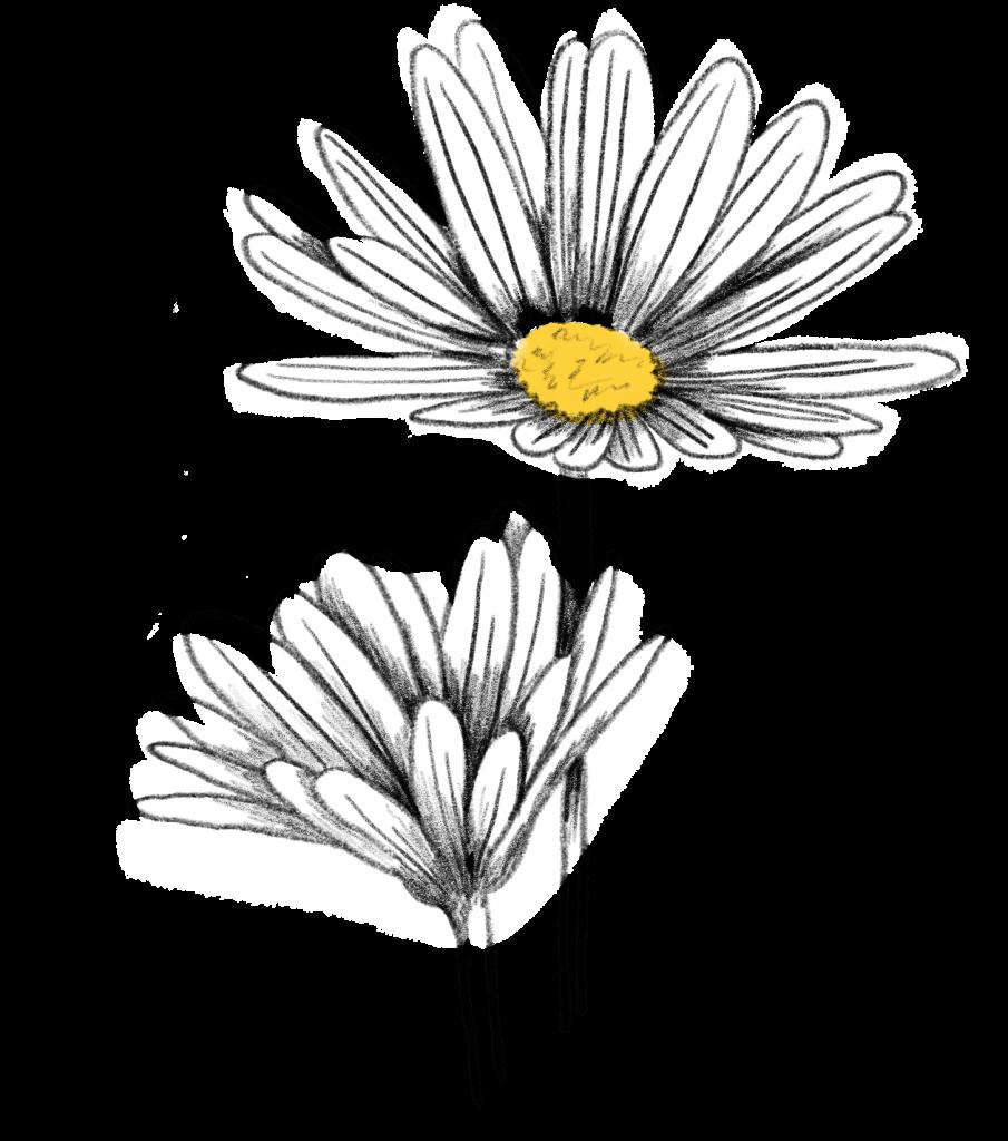 Blumen im Juni Margeritte
