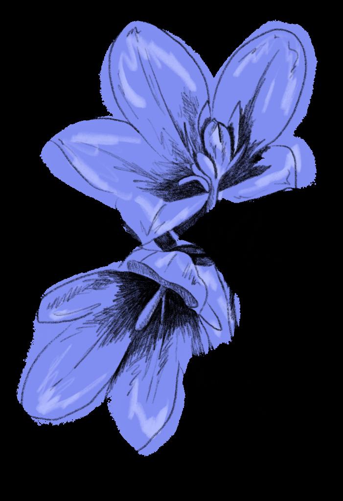 Glockenblume Saisonkalender Juli