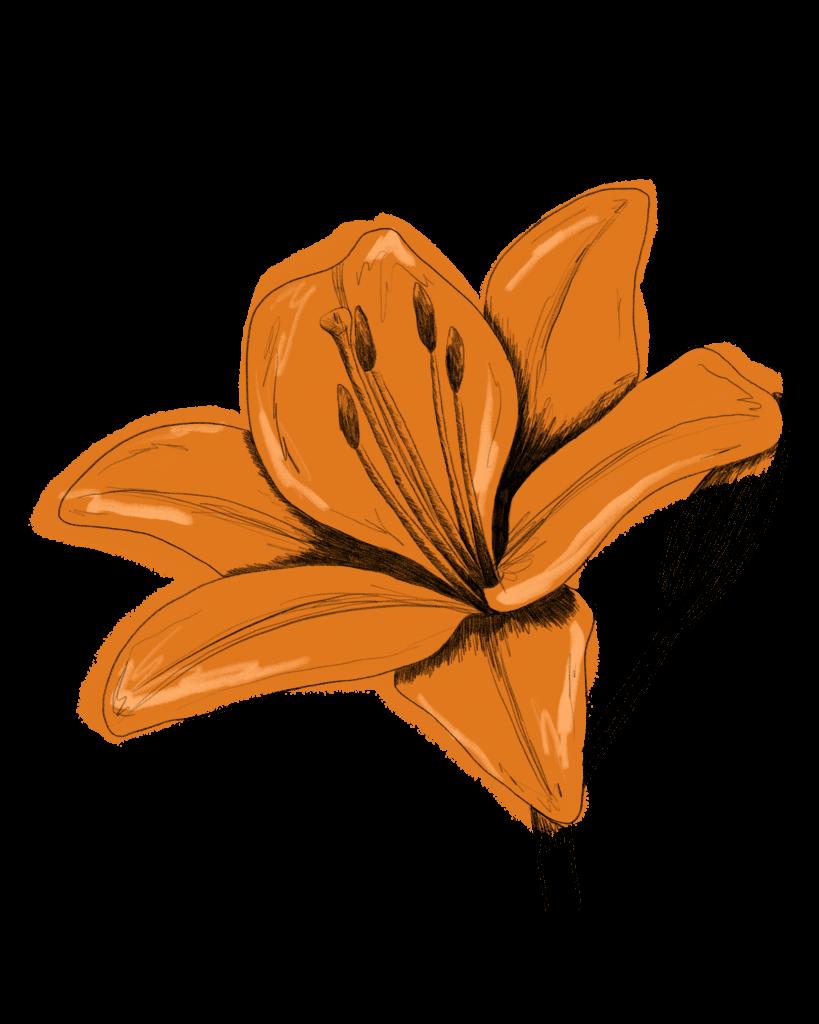 Lilie Saisonkalender Juli