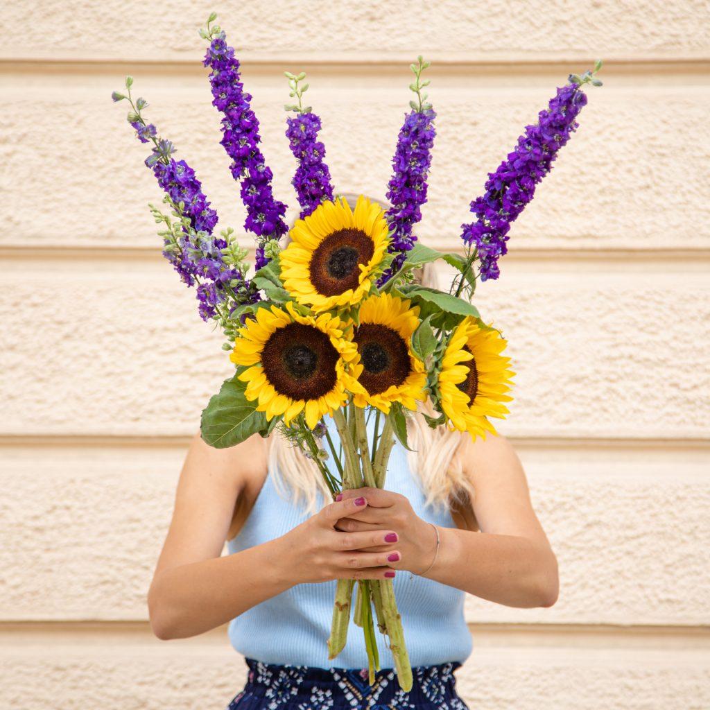 Pflegetipps Sonneblumen und Rittersporn