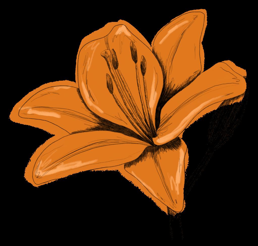 Saisonkalender August Lilie